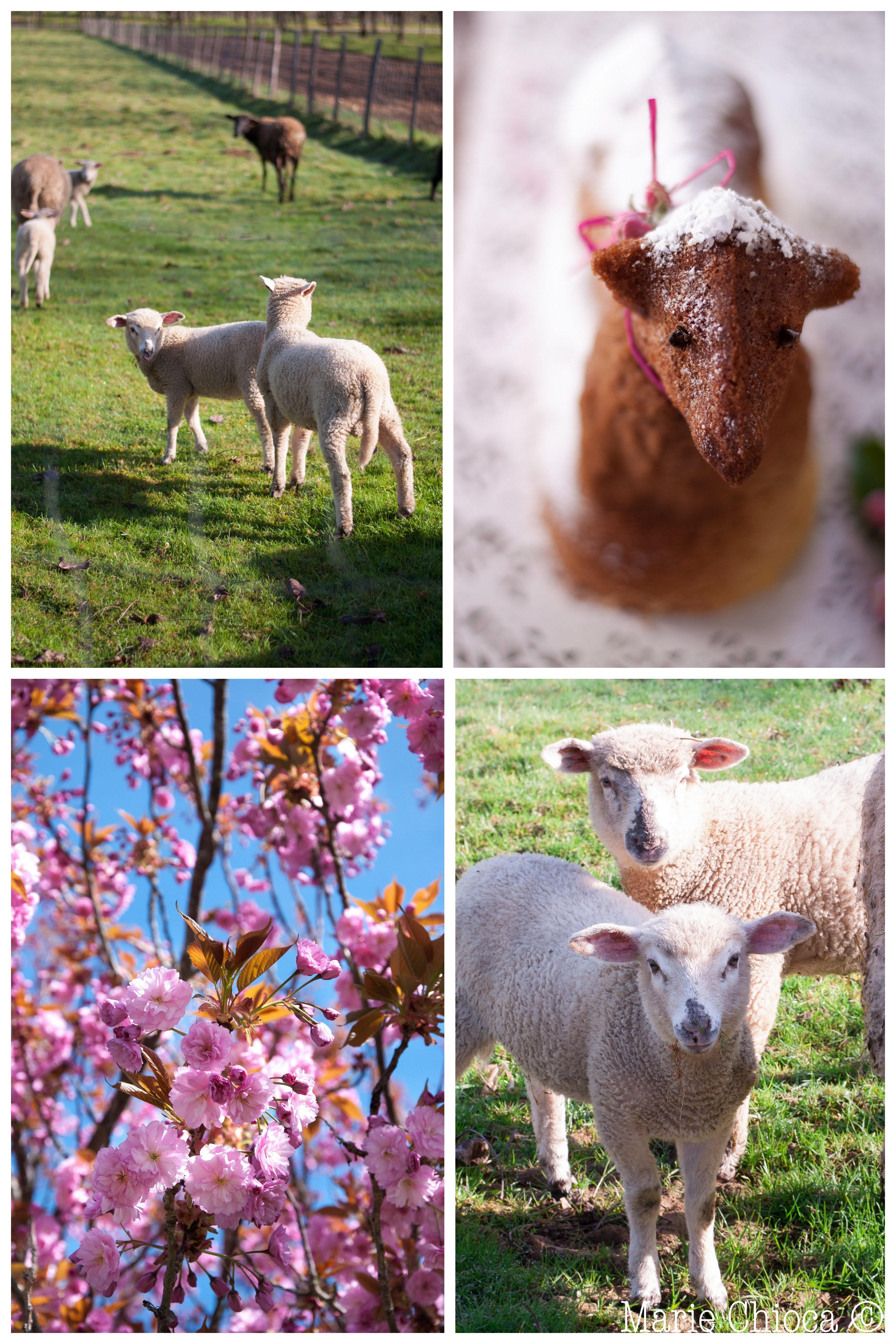 3 montage agneau