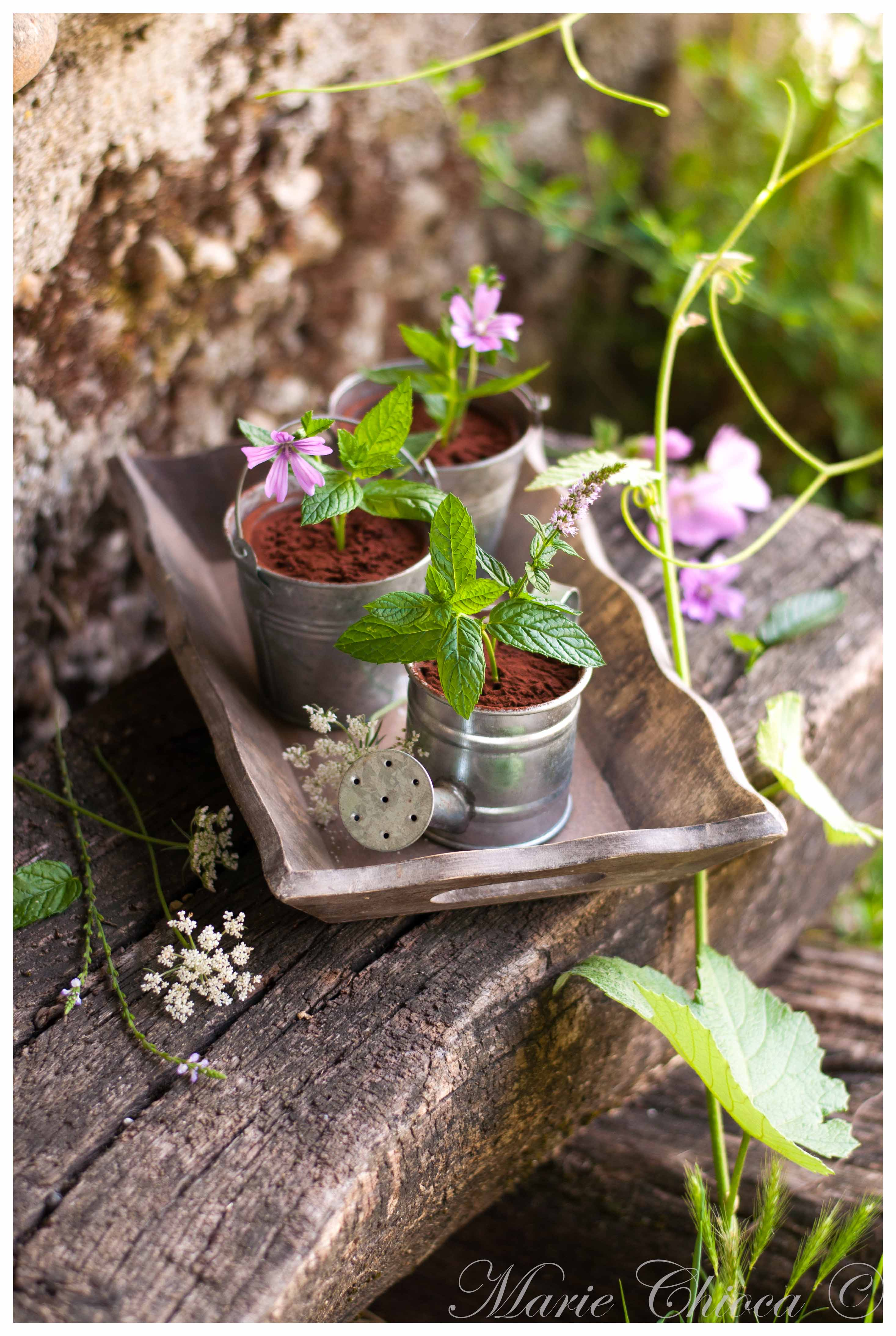 mousse-au-chocolat-mystere-du-jardiner-2