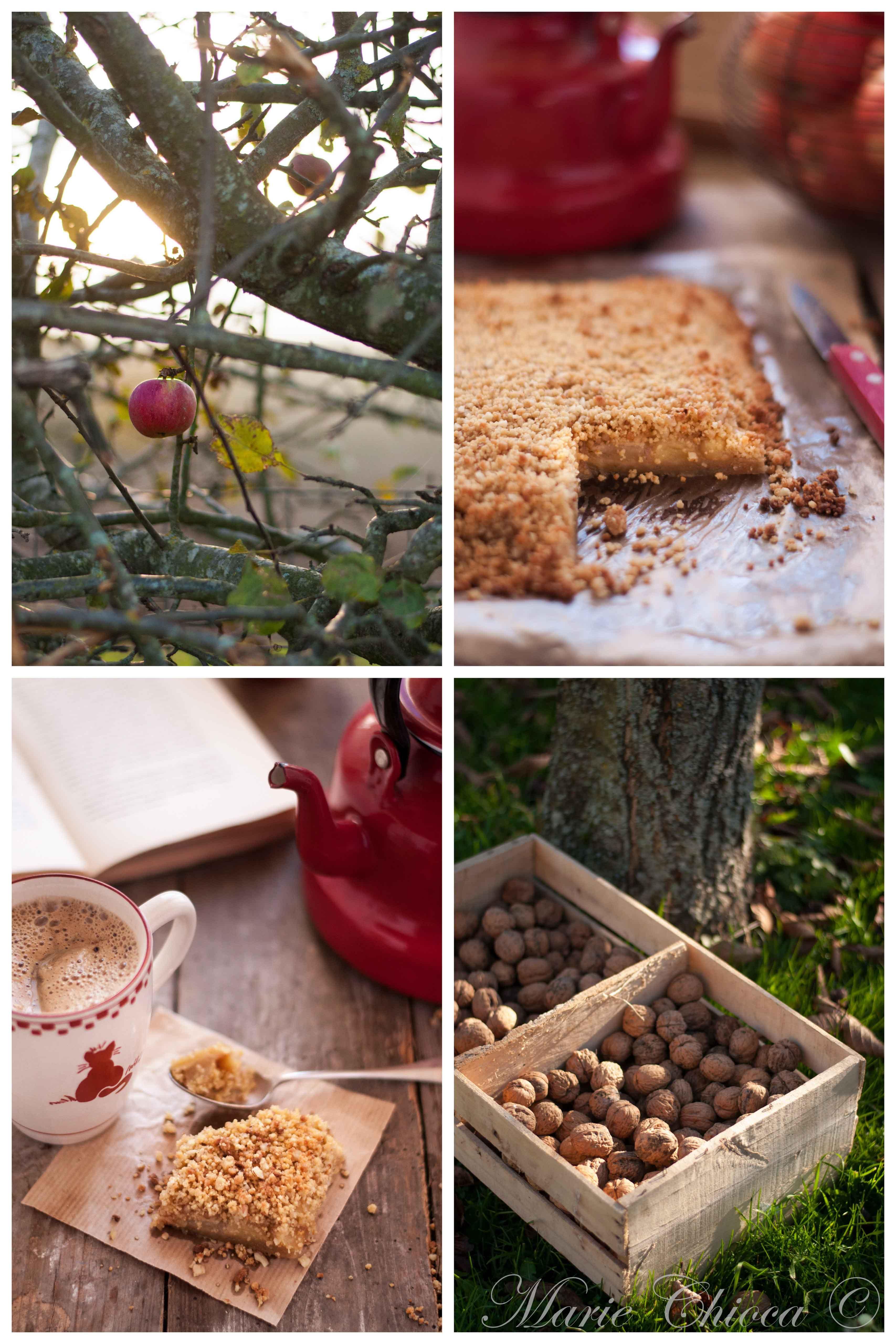 saison ramassage pomme de pin