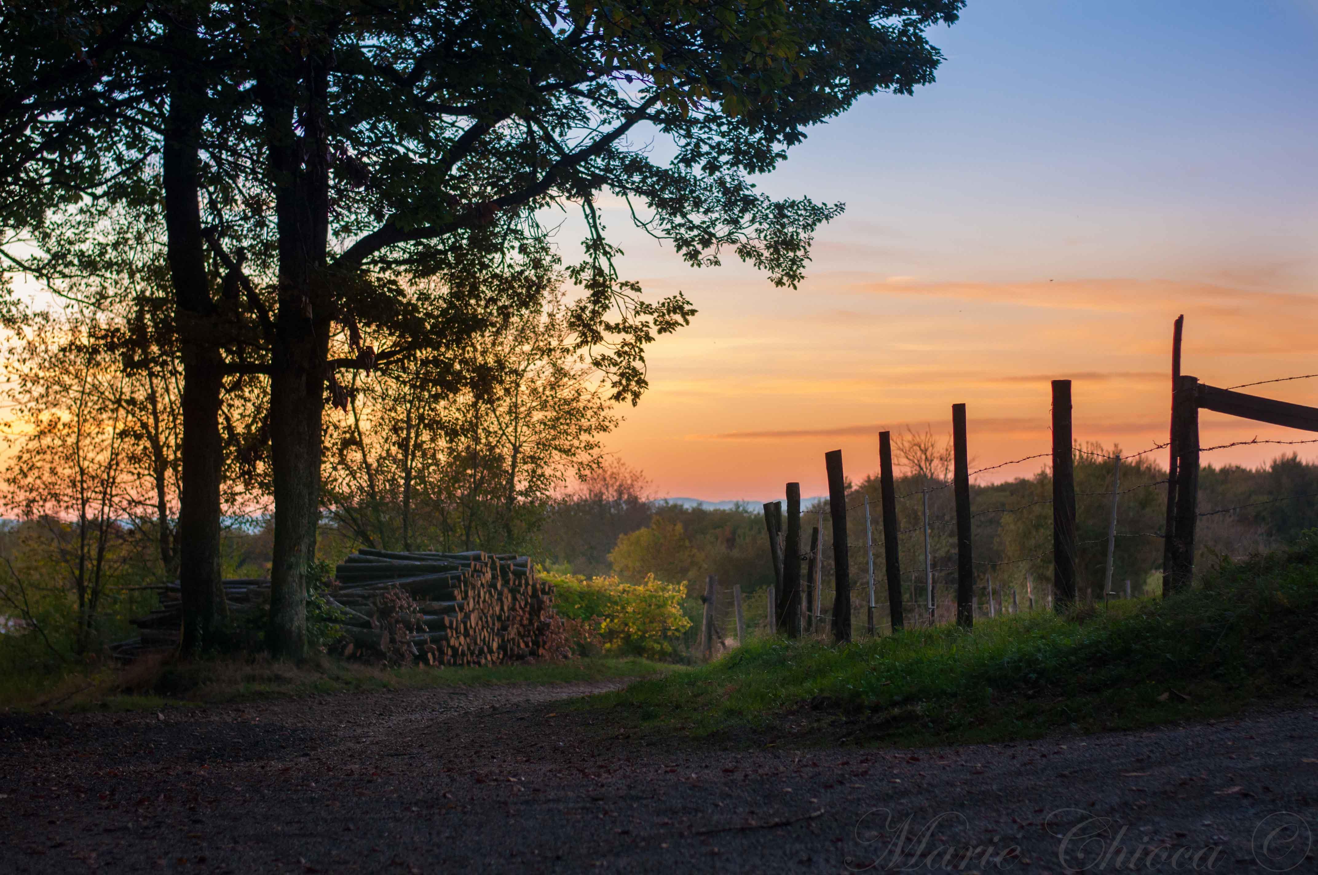 coucher-de-soleil-retour-de-cueillette-2