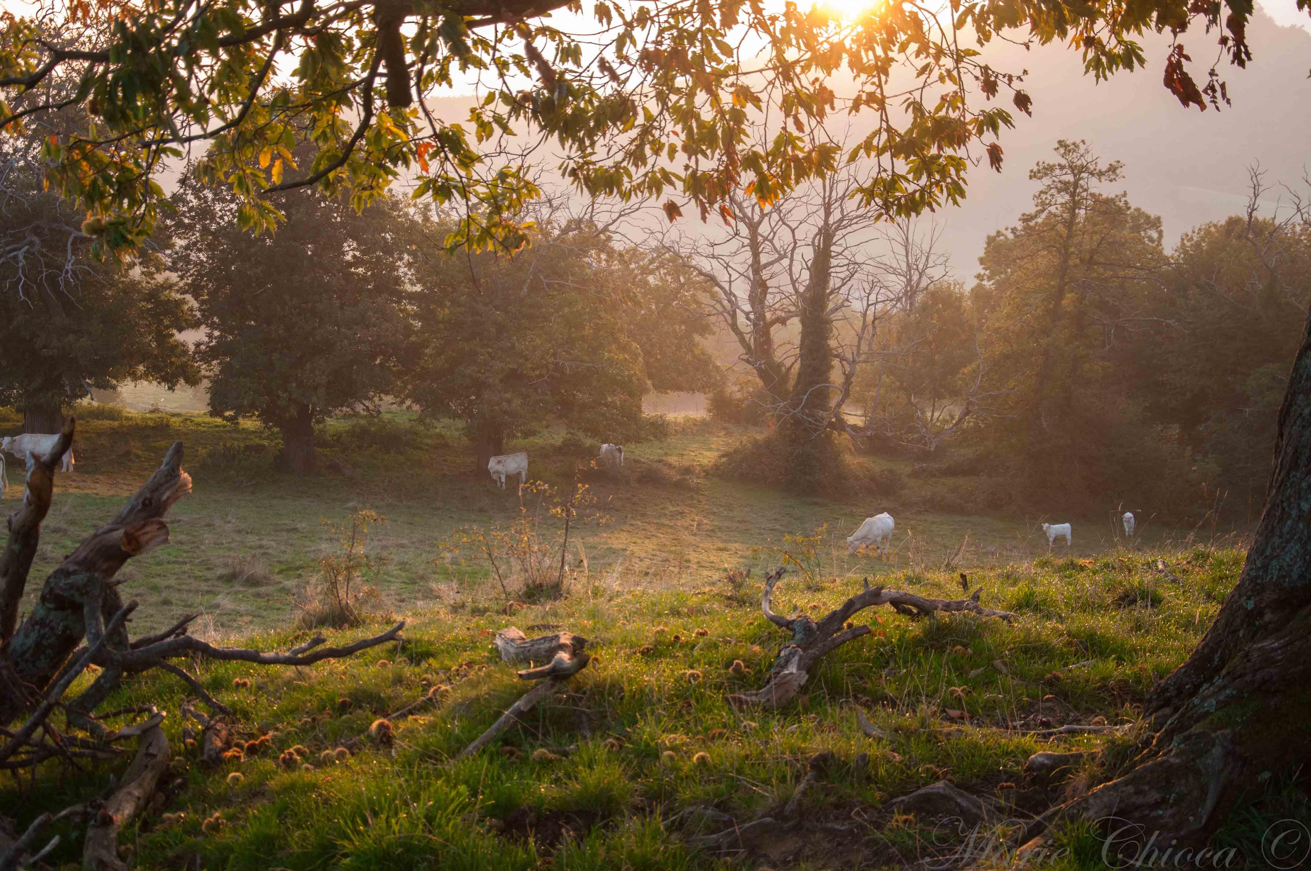 4-lever-de-soleil-troupeau-2